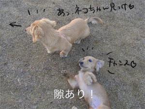 20061130034525.jpg