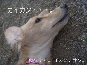 20061130041833.jpg