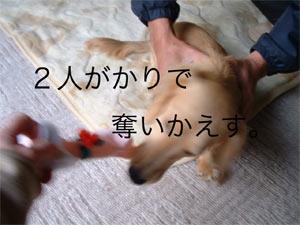 20061213233822.jpg