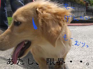20070703004746.jpg