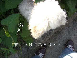 20070704023120.jpg