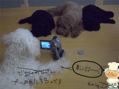 撮影5CIMG1931