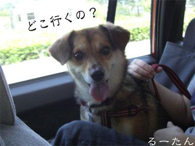 る1CIMG0903