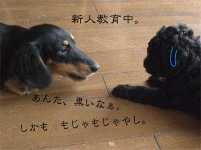 あんで&ぽこCIMG0944