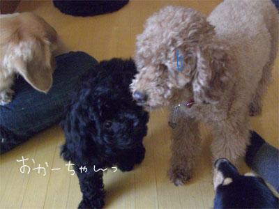 あん&あんでぃCIMG1867