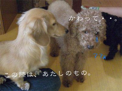みにこ&あんCIMG1861