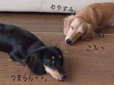 みにぽこCIMG2023