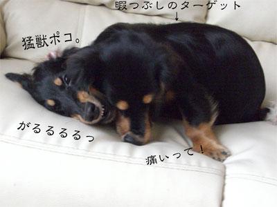ぺこぽこCIMG2032