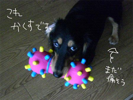 ぺこ4CIMG4577