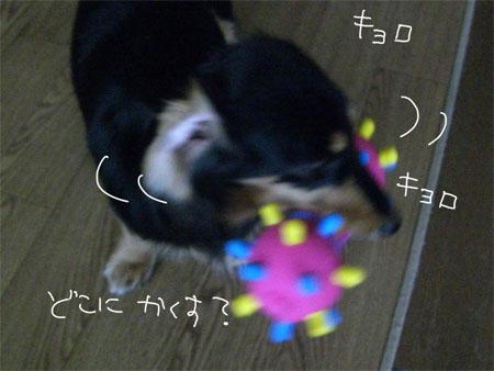 ぺこ5CIMG4578