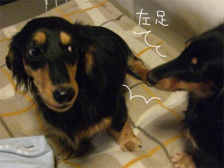 ぺこ左CIMG4606