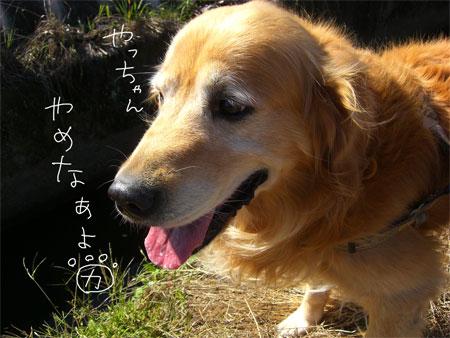 りきお1CIMG3624