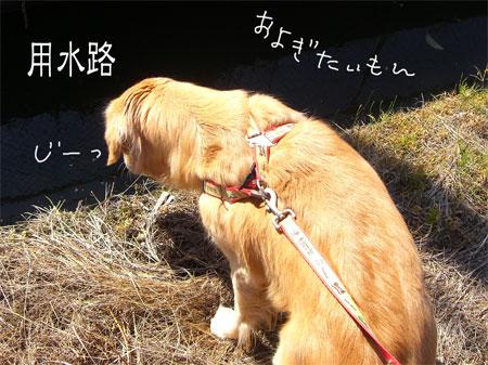 や2CIMG3619