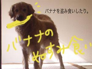 cyoiwarujiji2.jpg