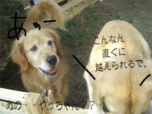 jijirikiya1CIMG3678.jpg