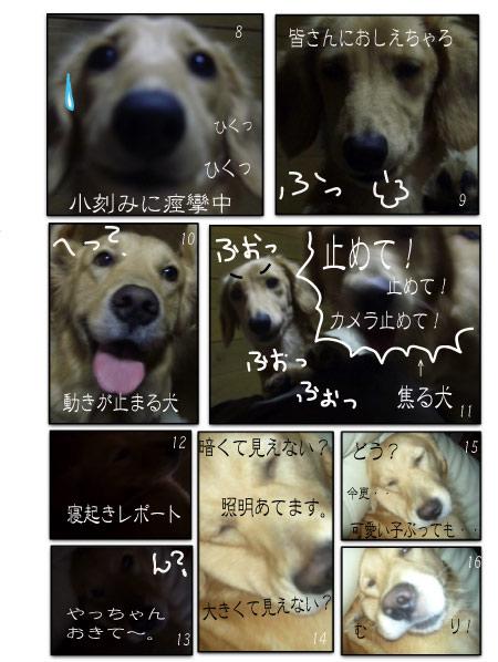 nirameko2.jpg