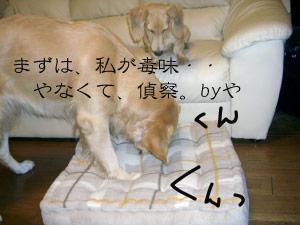 nito3CIMG3820.jpg