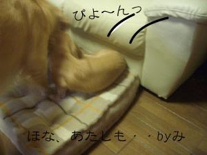 nito4CIMG3822.jpg