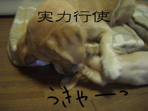 nito6CIMG3827.jpg