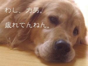 rijiji1CIMG3771.jpg
