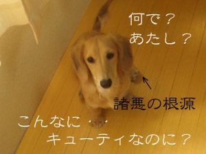 rijiji2CIMG3789.jpg