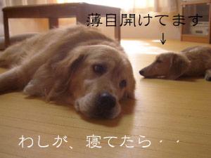 rijiji3CIMG3770.jpg