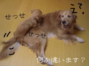 rijiji71CIMG3764.jpg