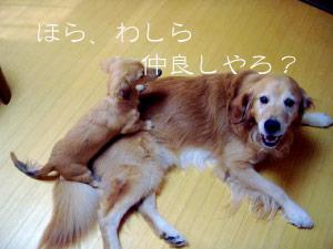 rijiji7CIMG3762.jpg