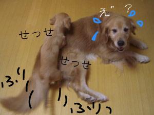 rijiji8CIMG3763.jpg
