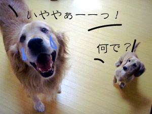 rijiji92CIMG3787.jpg