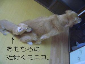 rijiji9CIMG3757.jpg