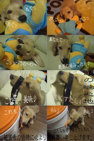 syoko1aCIMG2594.jpg