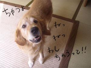 warujiji14CIMG4291.jpg