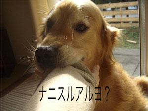 waruoyaji13CIMG4285.jpg