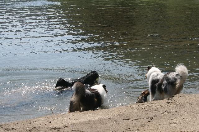 水遊びを堪能するモノトーンズ1
