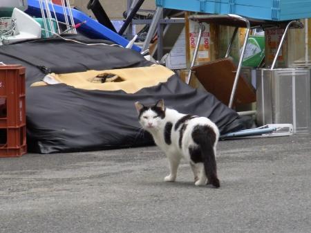 cat004.jpg