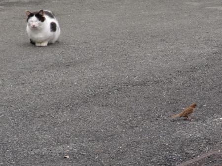 cat005.jpg