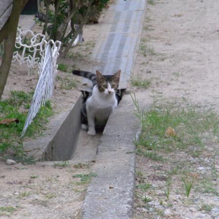 cat013.jpg