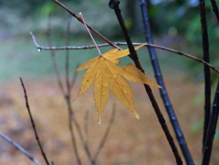 fallen_leaf_yellow.jpg