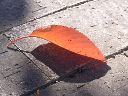 fallen_leaf.jpg