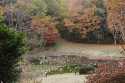 錦織公園の池