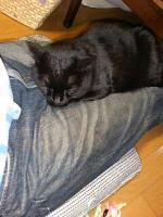 keitai2005_1113AD.jpg
