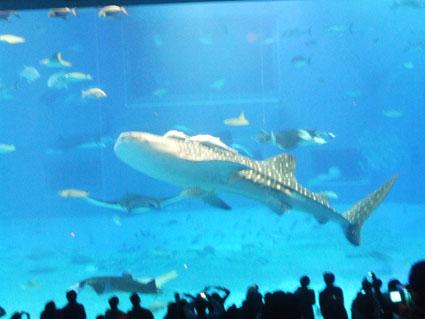水族館 3