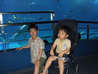 水族館 10