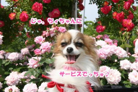 IMG_083001.jpg
