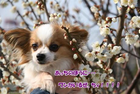 IMG_0899-5.jpg