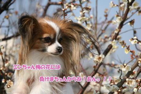 IMG_0909-5.jpg