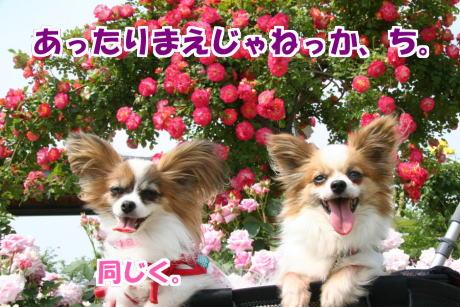 IMG_103014.jpg