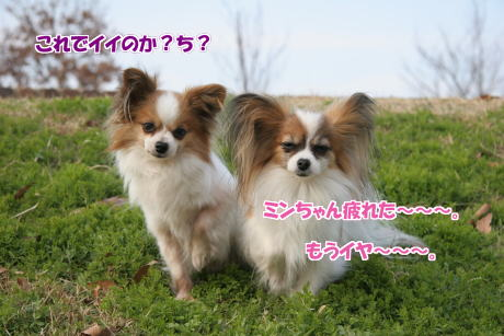IMG_1049-5.jpg
