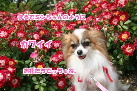 IMG_112976.jpg
